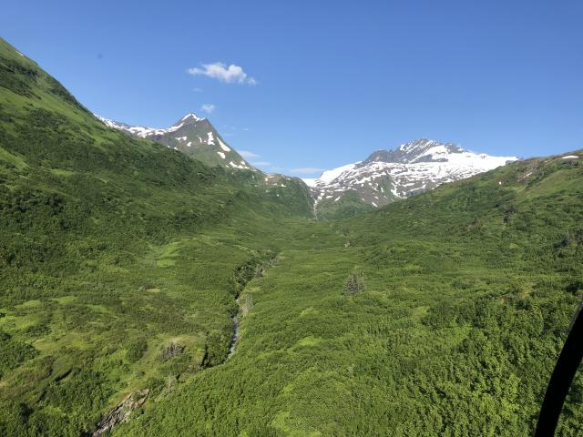 endless green forests during summer in the alpine of Alaska